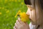 Girl with dandelion flowers