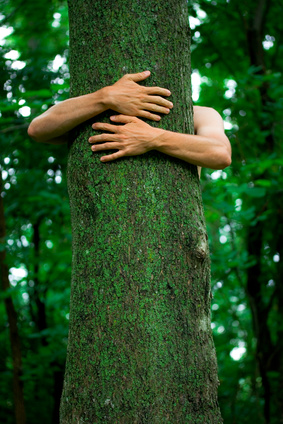 Arms of an environmental activist hugging a tall tree with spring green background