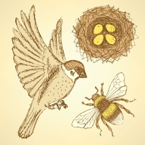 Sketch set with sparrow, bee and nest in vintage style